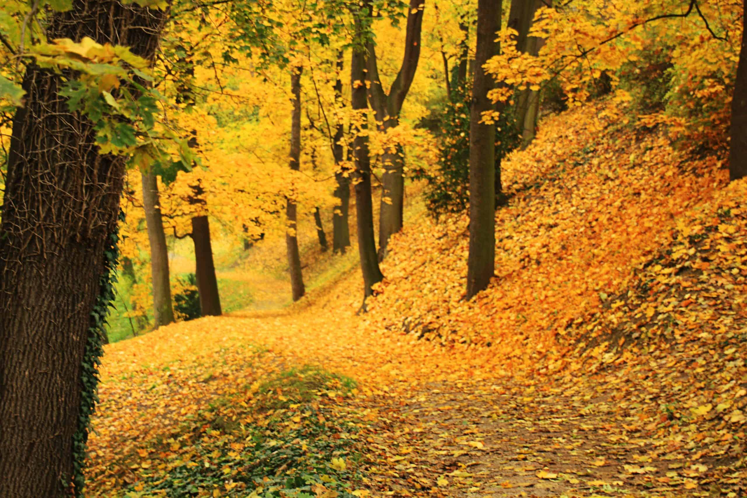 Prague - Forest